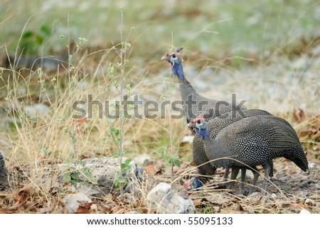 Birds in the bush - stock photo