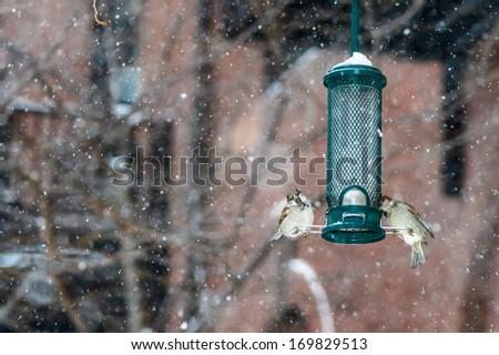 Birds in the snow in winter - stock photo