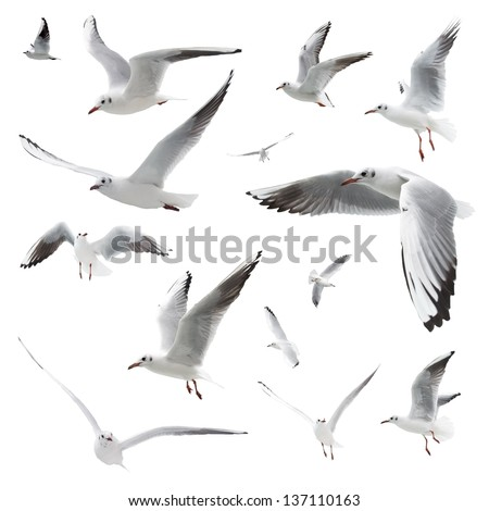 birds isolated on white - stock photo