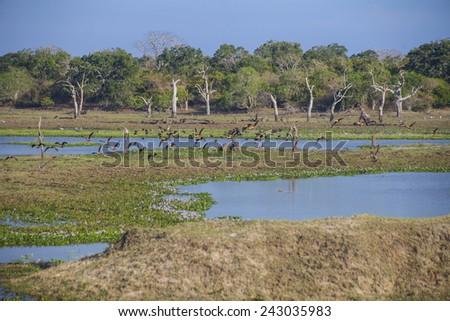 Birds, Nature and landscape in Yala National Park  - stock photo