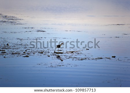 Birds  Of Kakadu National Park Australia - stock photo