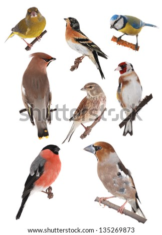 birds on a white background - stock photo