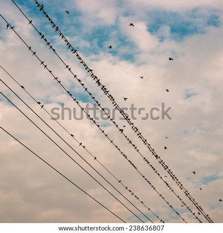 birds on power line wire against blue sky with clouds background vintage retro instagram filter - stock photo