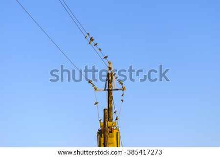 Birds on telephone wire isolated blue sky - stock photo
