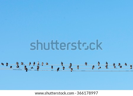 Birds On The Wire - stock photo