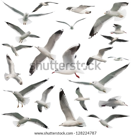 birds set isolated on white - stock photo
