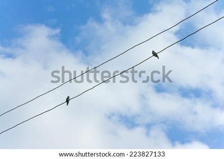Birds sitting on wires against the background of the cloudy sky - stock photo