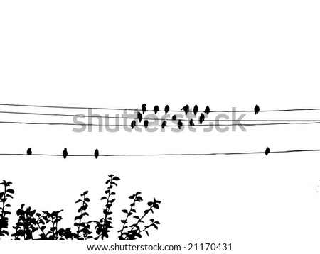 birds to waxwings on wire - stock photo