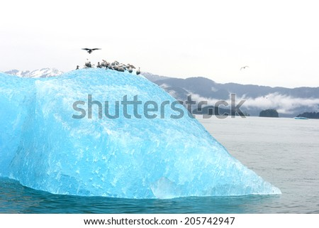 birds with blue iceberg floating in alaska - stock photo