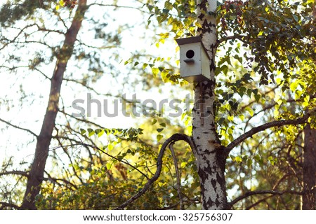 Birfhouse on the birch in the park. - stock photo