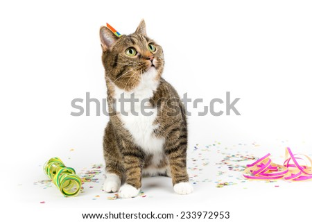 birthday cat with decoration - stock photo