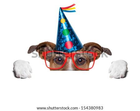 birthday dog hiding behind blank banner - stock photo