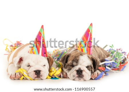 birthday party with bulldog puppies - stock photo