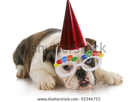 birthday puppy - english bulldog wearing party hat and silly glasses on white background - stock photo