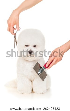 Bishon dog grooming and care - stock photo