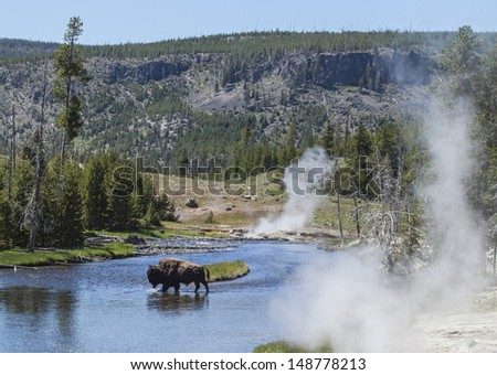 Bison in Yellowstone river, Upper Geyser Basin, Yellowstone National Park, Wyoming, USA - stock photo