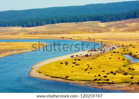 Bison paradise in Yellowstone National Park - stock photo