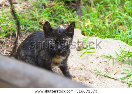 Black and brown cat, watching the camara - stock photo
