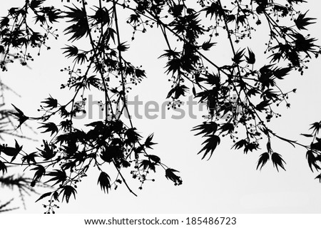 Black and White Abstract Pattern of Maple Twigs, flowers, and young Leaves in spring - stock photo