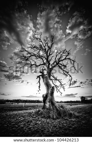 Black and White Alone Dead Tree on the highway - stock photo