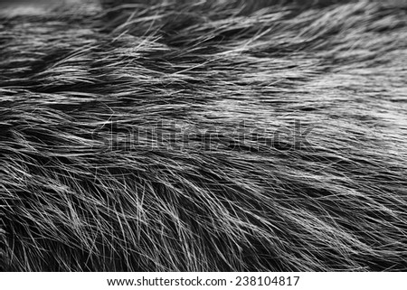 black and white animal fell texture - stock photo