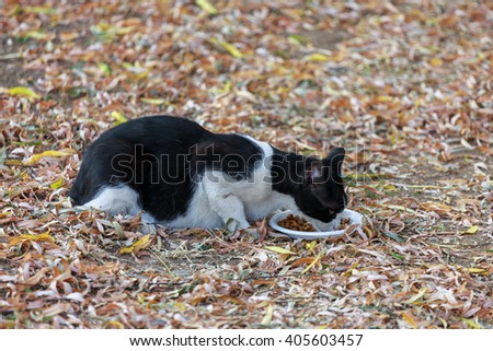 Black and white cat eats cats food in a dry leaves - stock photo