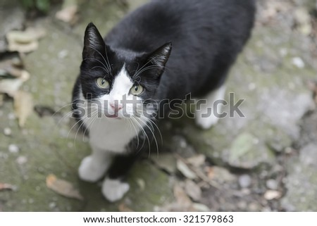 black and white cat looking up  - stock photo