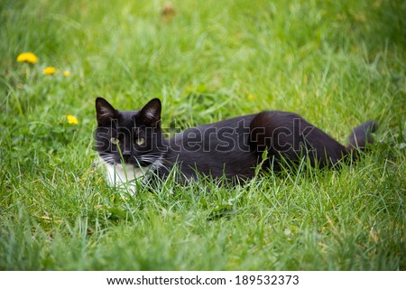 Black and white cat lying on grass - stock photo