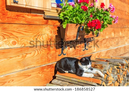 Black and white cat rests in sun on porch of alpine house, Sassolungo, Dolomites Mountains, Italy - stock photo