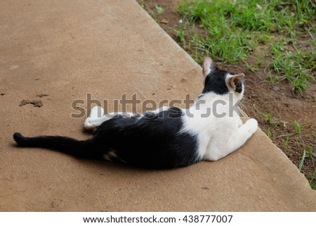 Black and white cat sit on the floor - stock photo