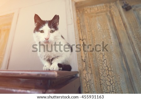 Black and white cat sitting on a wooden table - stock photo