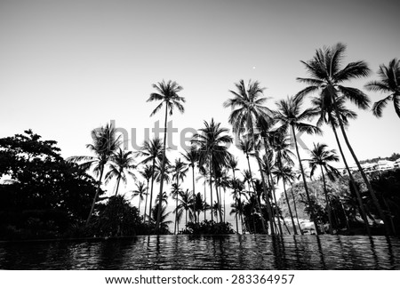 Black and white color of coconut tree on the beach at Samui island - stock photo