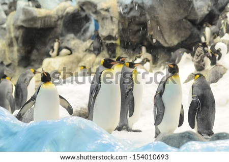 Black and White Colored Penguin in a Cold Place - stock photo