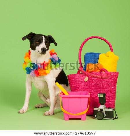 Black and white cross breed dog on vacation at green background - stock photo