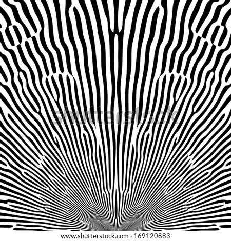 Black and white Curved Stripes. Zebra texture. - stock photo