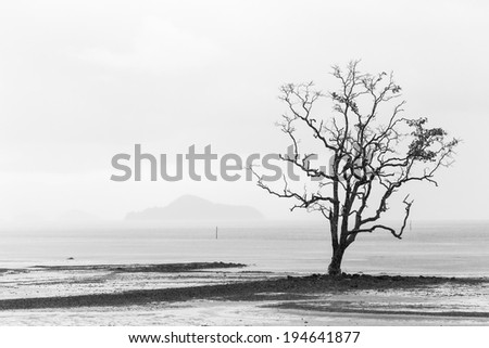 black and white dying tree stands alone on the beach - stock photo