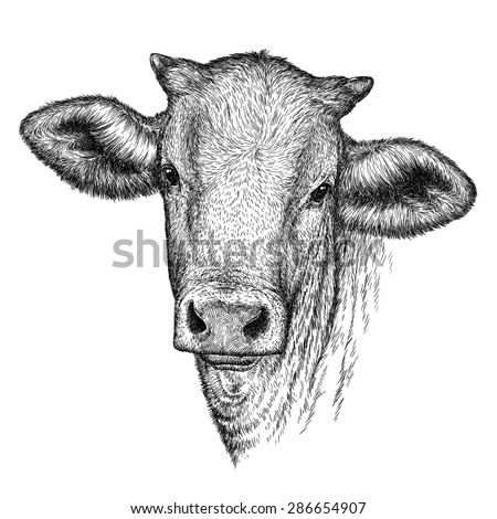 black and white engrave isolated cow head - stock photo