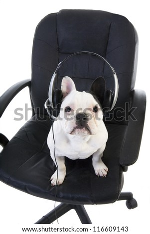 Black and white French bulldog sitting in office chair wearing headset like operator or tech support person isolated on white background - stock photo