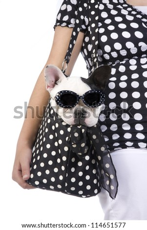 Black and white French bulldog wearing fashion sunglasses puppy in purse carried by girl in black and white polka dots isolated on white background - stock photo