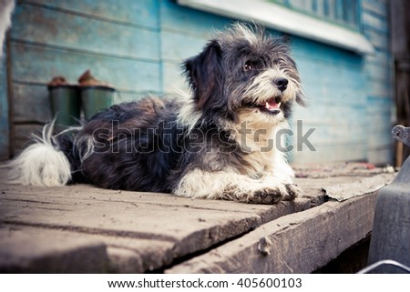 Black and white furry dog lays on the boards of porch. - stock photo