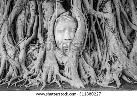 black and white, Head of Buddha statue in the tree roots at Wat Mahathat temple, Ayutthaya, Thailand. - stock photo