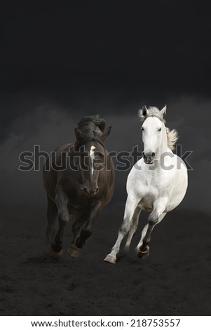 Black and white horses running in the dark wild - stock photo
