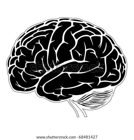 black and white human brain. jpg - stock photo