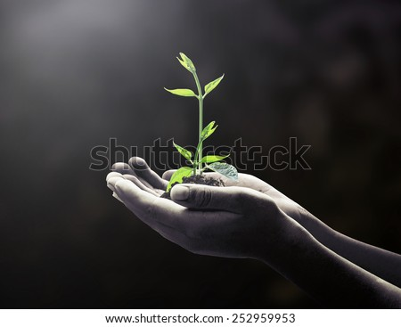 Black and white human hands holding young plant over blurred soil or dark room background. Ecology concept. - stock photo