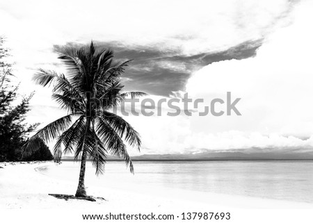 Black and white image of tropical beach - stock photo
