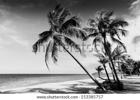 Black and white image of tropical beach,Thailand - stock photo