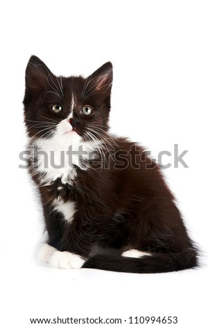Black-and-white kitten on a white background - stock photo
