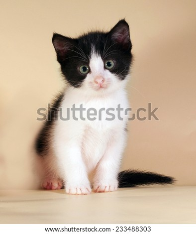 Black and white kitten sitting on yellow background - stock photo