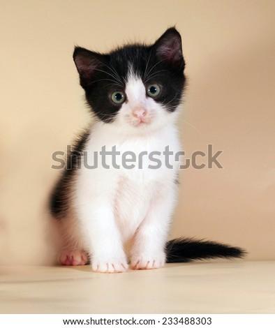 Black and white kitten sitting on yellow background - stock photo