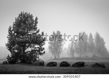 black and white landscape with stones - stock photo